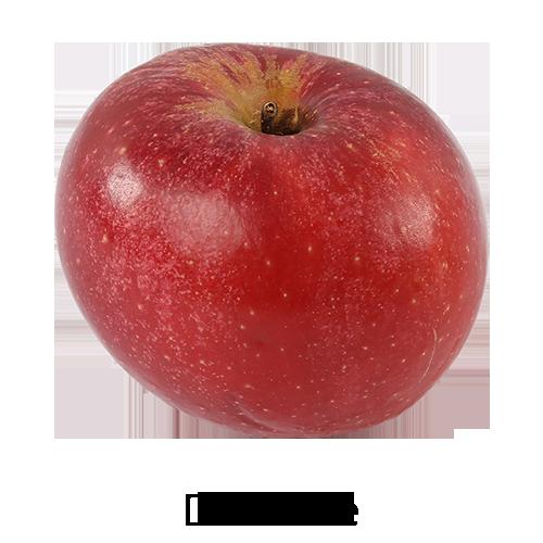 dalinette-cascina-angiolina